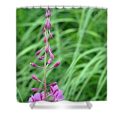 Fireweed Shower Curtain by Lisa Phillips