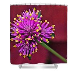 Fireworks Flower Shower Curtain by Byron Varvarigos