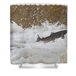 Fish Jumping Upstream In The Water Shower Curtain by John Short