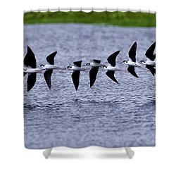 Flight Of 13 Plus 1 Shower Curtain by Rob Travis