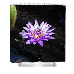Floral Burst Of Purple Shower Curtain by Jennifer Ancker