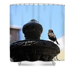 Fluff Dry Shower Curtain by Cheryl Young