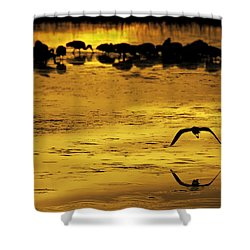 Flying Home - Florida Wetlands Wading Birds Scene Shower Curtain by Rob Travis