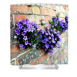 Follow The Flower Brick Wall Shower Curtain by Rene Triay Photography