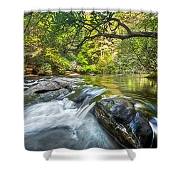 Forest Jewel Shower Curtain by Debra and Dave Vanderlaan