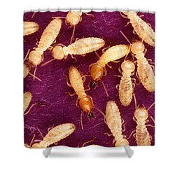 Formosan Termites Shower Curtain by Science Source