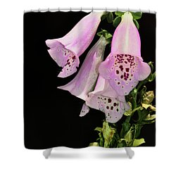 Fox Glove Bells Shower Curtain by Bill Cannon
