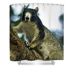Fox Squirrel Shower Curtain by Phill Doherty
