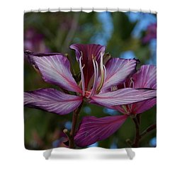 Freeze Shower Curtain by Joseph Yarbrough