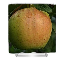 Fresh Apple Shower Curtain by Susan Herber
