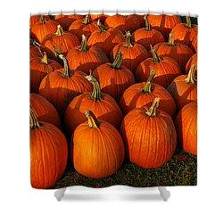 Fresh From The Farm Orange Pumpkins Shower Curtain by LeeAnn McLaneGoetz McLaneGoetzStudioLLCcom