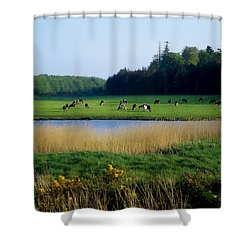 Friesian Cattle, Near Cobh, Co Cork Shower Curtain by The Irish Image Collection