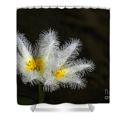 Frilly White Water Lily Shower Curtain by Sabrina L Ryan