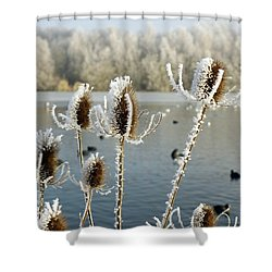 Frosty Teasel Shower Curtain by John Chatterley