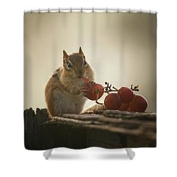 Fruit Of The Vine Shower Curtain by Susan Capuano