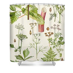 Garden Angelica And Other Plants  Shower Curtain by Elizabeth Rice