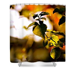 Garden Of Dreams. Colorful World  Shower Curtain by Jenny Rainbow