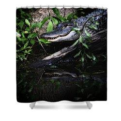 Gator Reflect Shower Curtain by Karol Livote