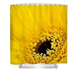 Gerbera Flower Shower Curtain by Elena Elisseeva