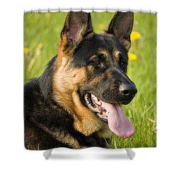 German Shepherd Shower Curtain by Meirion Matthias