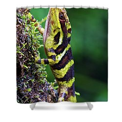 Giant Anole Dactyloa Microtus Male Shower Curtain by James Christensen