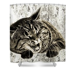 Giggle Kitty  Shower Curtain by Andee Design