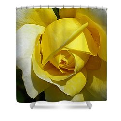 Gina Lollobrigida Rose Shower Curtain by Kaye Menner