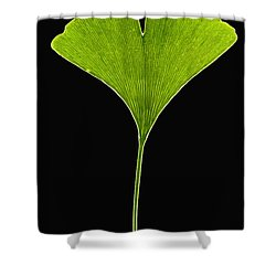 Ginkgo Leaf Shower Curtain by Piotr Naskrecki