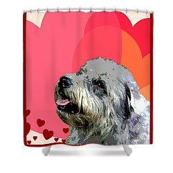 Glen Of Imaal Terrier Shower Curtain by One Rude Dawg Orcutt