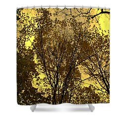 Glisten Shower Curtain by Ed Smith
