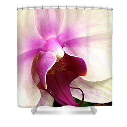 Glorious Orchid Shower Curtain by Renee Trenholm