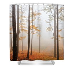 Golden Autumn Forest Shower Curtain by Evgeni Dinev