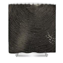 Golden Silk Spider  Shower Curtain by Patrick M Lynch
