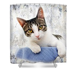 Grand Kitty Cuteness 2 Shower Curtain by Andee Design