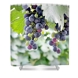 Grapes On The Vine Shower Curtain by Glennis Siverson