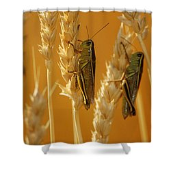 Grasshoppers On Wheat, Treherne Shower Curtain by Mike Grandmailson