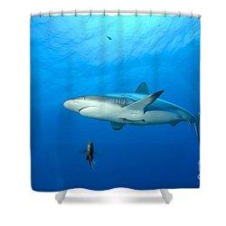 Gray Reef Shark. Papua New Guinea Shower Curtain by Steve Jones