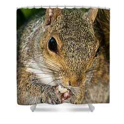 Gray Squirrel Shower Curtain by Fabrizio Troiani