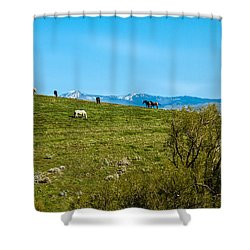 Grazing Horses Shower Curtain by Robert Bales