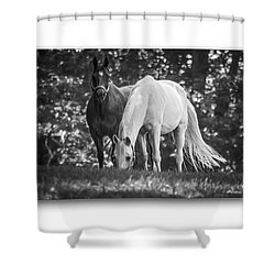 Grazing In Black And White Shower Curtain by Brian Wallace