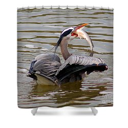 Great Blue With A Drum Shower Curtain by Robert Frederick