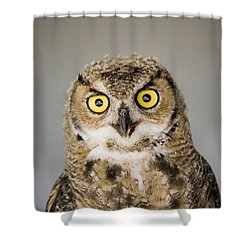 Great Horned Owl Shower Curtain by Henry Georgi Photography Inc