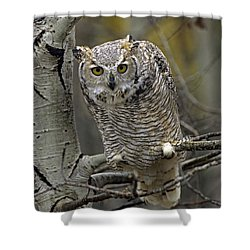 Great Horned Owl Pale Form Kootenays Shower Curtain by Tim Fitzharris