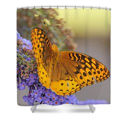 Great Spangled Fritillary Butterfly Shower Curtain by Paul Ward