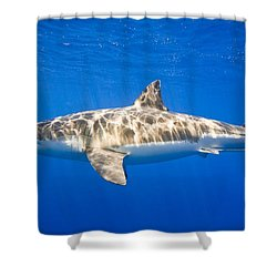 Great White Shark Carcharodon Carcharias Shower Curtain by Carson Ganci