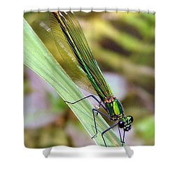 Green Damselfly Shower Curtain by Ramona Johnston