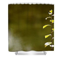Green Morning Shower Curtain by LeeAnn McLaneGoetz McLaneGoetzStudioLLCcom