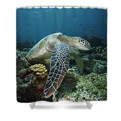 Green Sea Turtle Chelonia Mydas Shower Curtain by Hiroya Minakuchi