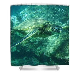 Green Sea Turtle Hawaii Shower Curtain by Bob Christopher