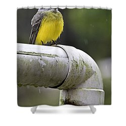 Grey-capped Flycatcher Shower Curtain by Heiko Koehrer-Wagner